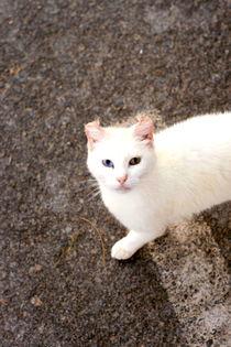 Spanish Cat 2 von Lucja Lipinska