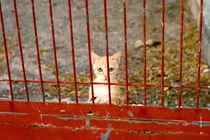 Spanish Cat 3 von Lucja Lipinska