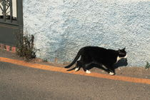 Spanish Cat 1 von Lucja Lipinska