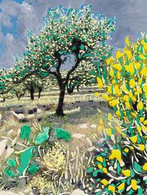 Olive Tree & Gorse Bush by Erwin Nas