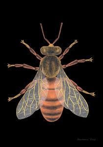 Bee von Anastassia Elias
