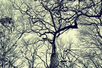 Baum-2016-001swc-small