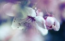 Blüte von Gabriele Brummer