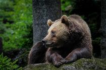 grizzly von Leander Wenger