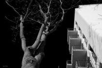 Night Tree von malin