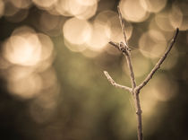 Bokeh in the dawn von lauradiaranature