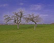 fields near Laupheim by Michael Naegele