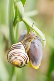 Erklimmen der Blüte by Stephan Gehrlein