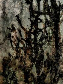 ghost wood von k-h.foerster _______                            port fO= lio
