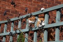Cat On A Fence by Malcolm Snook