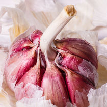 Knoblauch by renard