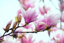 Frühlingszauber von gugigei