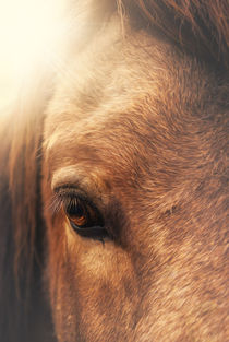 Equine eye by Marcus Hennen