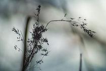 Frühblüher von Alexander Kollmer