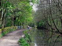 Cromford Canal, Tree Lined Walk von Rod Johnson