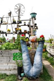 Urban Gardening von Rainer F. Steußloff