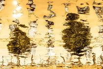 Bäume Spiegel im Wasser von Rainer F. Steußloff