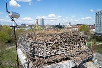 Überwachung am Nest von Stephan Gehrlein