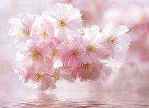 'Im Rausch der Blüten' von foto-m-design