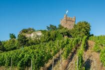 Burg Klopp 97 von Erhard Hess