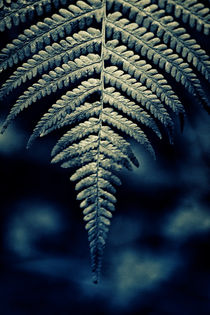 Forever Fern by Vicki Field
