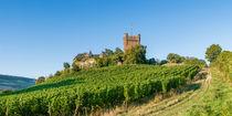 Burg Klopp in Bingen by Erhard Hess