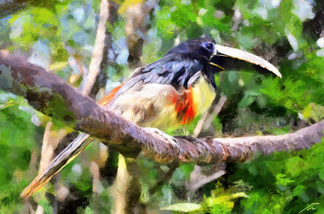 Bird-1314841-dap-pino