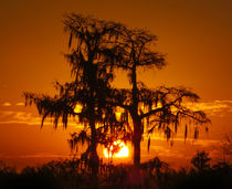 Louisiana Sunsets No.16 by Michael DeBlanc