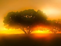 Louisiana Sunsets No.19 by Michael DeBlanc