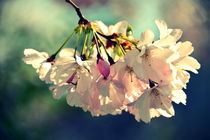 Frühlingszauberei von gugigei