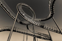 Tiger and Turtle (7-10373) B+W von Franz Walter Photoart