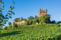 Burg Klopp 84 von Erhard Hess