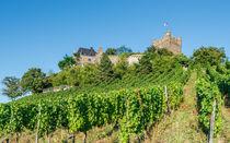 Burg Klopp 17 von Erhard Hess