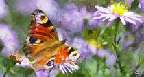 Peacock-butterfly-465210-dap-pino