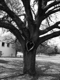 Heart Tree by Michael DeBlanc
