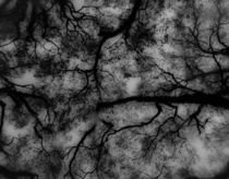 Overhead-tree-limbs
