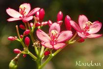 Flower-pink-bunch-3