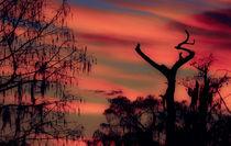 The Jesus Tree No.1 by Michael DeBlanc