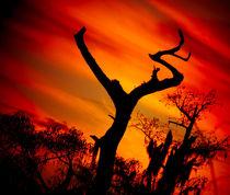 The Jesus Tree No.4 von Michael DeBlanc