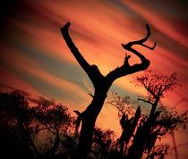 The Jesus Tree No.5 by Michael DeBlanc