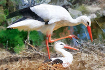 stork by Wolfgang Pfensig