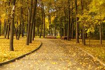 Benches in the autumn park by Gaukhar Yerk