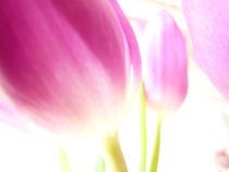 Tulipe by Gabriele Köder - Bercher