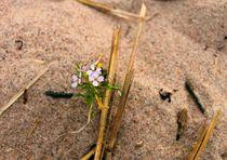 Lonely Flower  by Heidi Piirto
