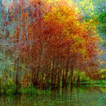 Fall Foliage No.3 by Michael DeBlanc