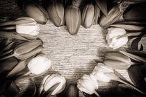 Heart shaped Tulips Art by Gerhard Petermeir