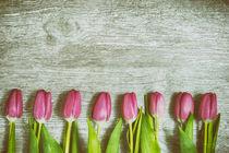 Pink Tulips in a Row Art von Gerhard Petermeir