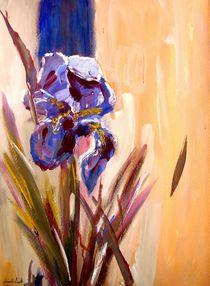 Iris von Eberhard Schmidt-Dranske