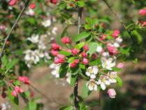 Blütenduft von Ulrike Ilse Brück
