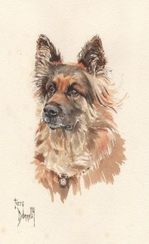 German Shepherd von terrydonnelly